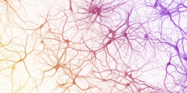 mulitcolored-neurons-2-660x330