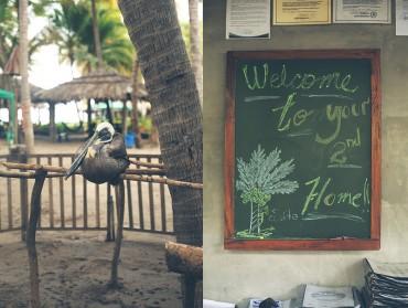 EQ~pelican_home